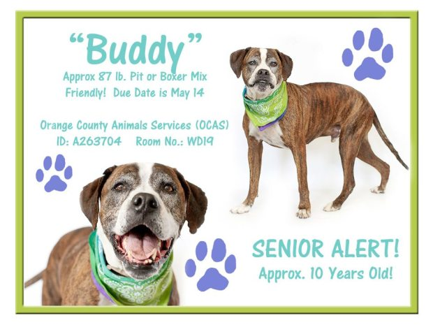 Senior Alert - Orlando, Florida - kill shelter! Pleaseeeee